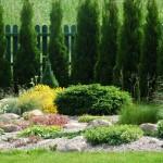 augalų persodinimas sode, patarimai