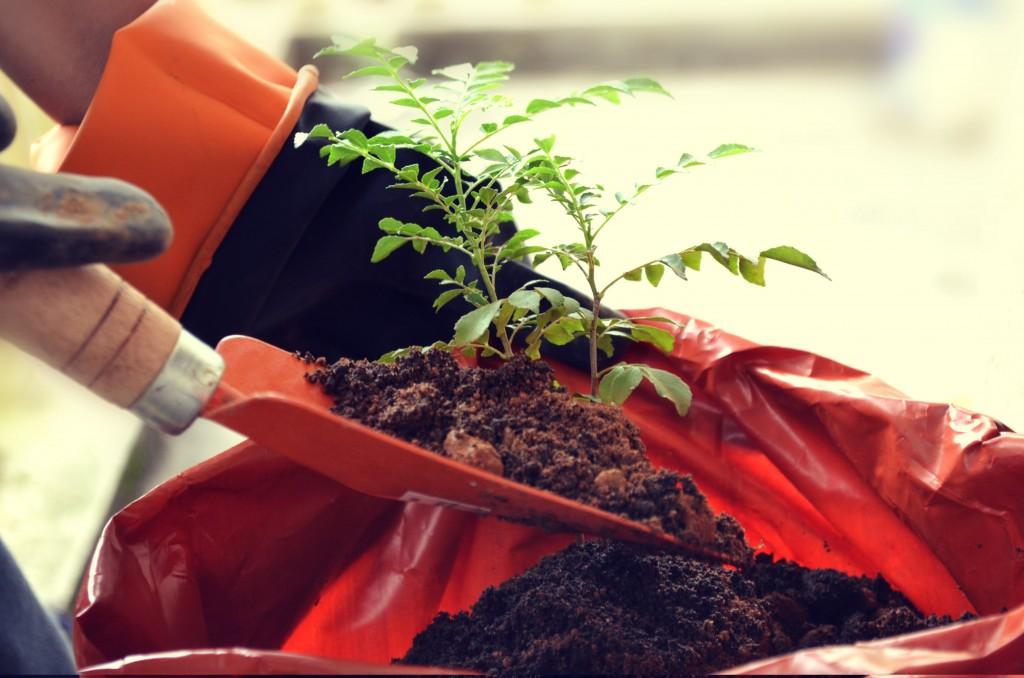 Ką reikia žinoti norint sėkmingai persodinti augalus?